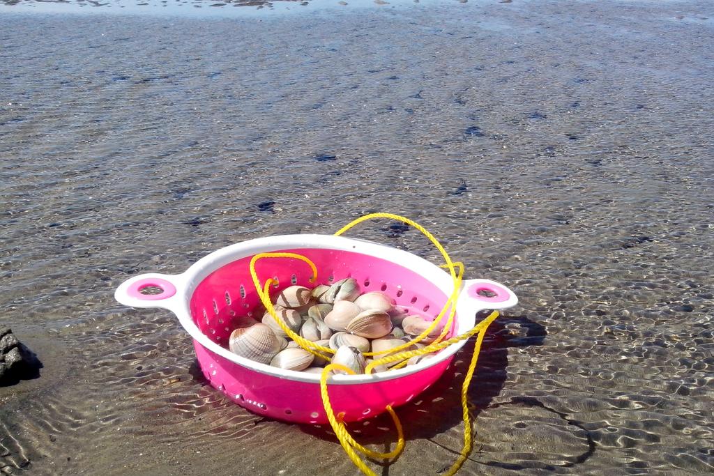 Muscheln am Strand von Collingwood