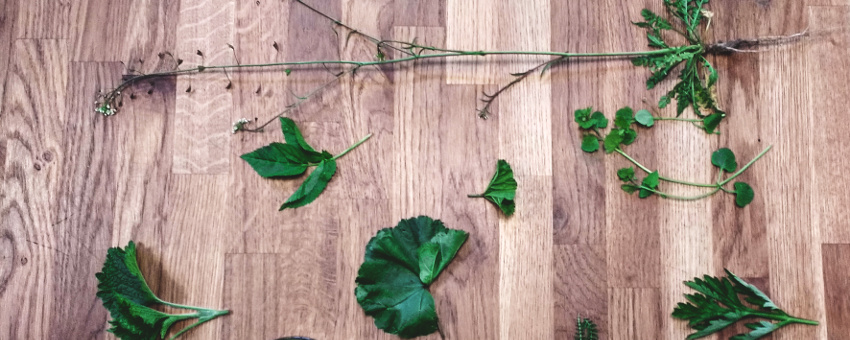 Anschauungsmaterial im Wildkräuter-Seminar - diese Kräuter wachsen alle im Hinterhof