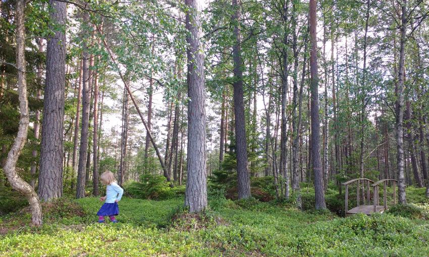 Bullerbü-Ferien in Smaland_Schweden_Blaubeeren im Ronja Räubertochter Wald
