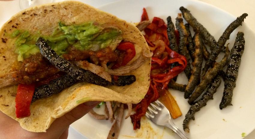 Tacos mit frittierten Chia-Würmern