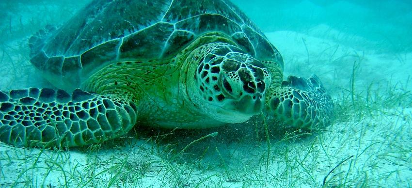 Wie alt diese Schildkröte wohl sein mag?