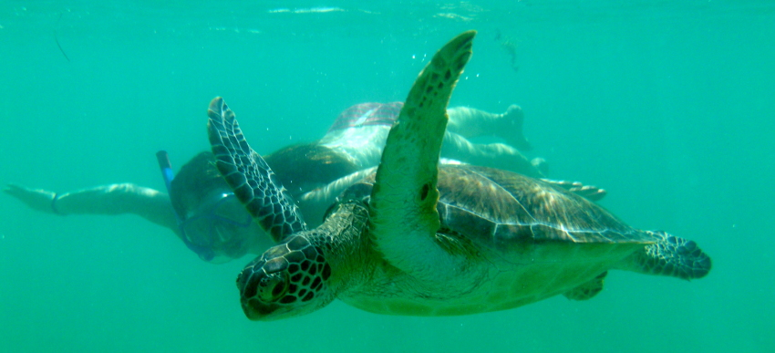 So bitte nicht! Die Schildkröten bekommen Panik, wenn man ihnen zu nah kommt, und können sogar ersticken!