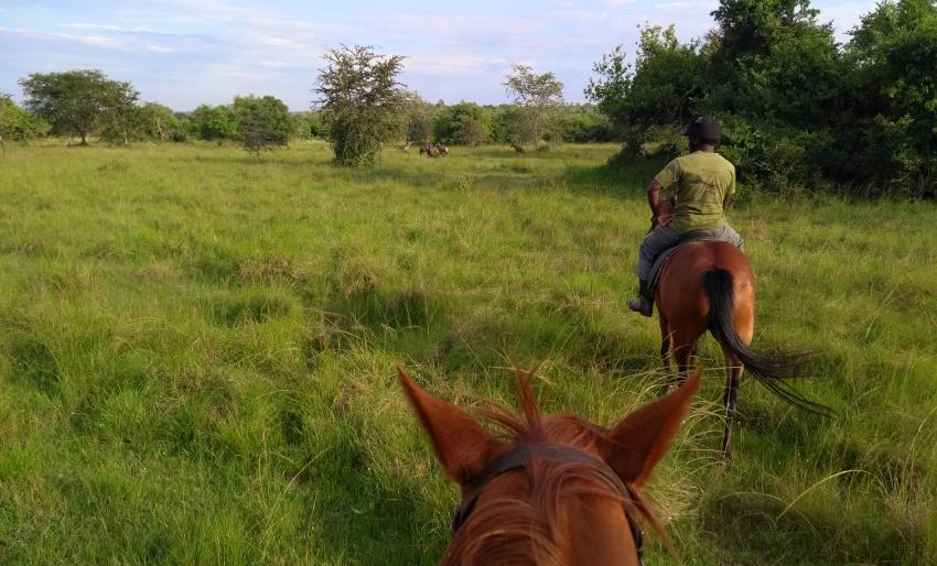 Reitsafari im Lake Mburo Nationalpark mit Nicolas, dem Herr der Pferde der Mihingo Lodge