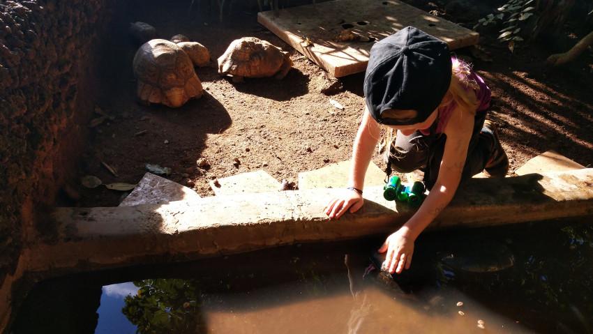 Kann man Schildkröten streicheln? Komm, wir probieren es mal!