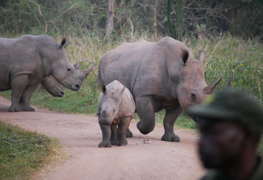 Dieser Moment, wenn man verschlafen zum Badezimmer läuft und plötzlich einer Nashornherde begegnet