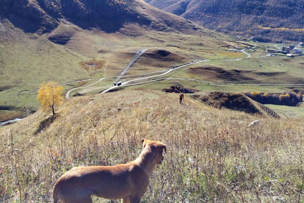 titel_Ushguli Wandern Hunde Georgien Kaukasus Svanetien